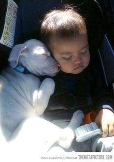 funny baby puppy cute sleeping