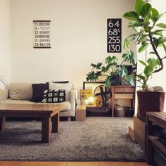 ichikaさんの、部屋全体,コウモリラン,セローム,ゴムの木,Tomoちゃんリメ缶❤︎,hal36さんのバスロールサイン,ebimusumeちゃんのモチーフ*,リメ缶ライト,usukoちゃんプラハン♡,関西好きやねん会,ソファ,rie-518ちゃんのティッシュケース,無印良品,のお部屋写真