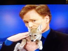 Conan with a coyote pup