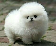 Its a snowball with a face!