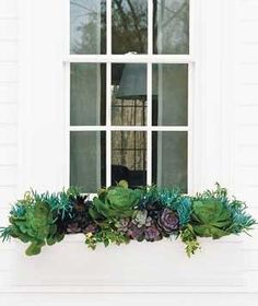 Gorgeous succulent window box! Succulents thrive on neglect. They love to bask in the sun, and they won't dry out, because their leaves have a built-in water supply.