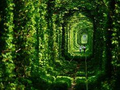 O túnel do amor – Conhecem?  O túnel é lindo e nos remete a paisagens que se confundem com sonhos e realidades, mais parece cenário de filme.  Esse túnel natural fica na região de Klevan, um pequeno povoado da Ucrânia. O túnel, todo moldado e atapetado por árvores e muito verde, corta um bosque e lembra um portal, capaz de transportar quem passa por ali para outro mundos....