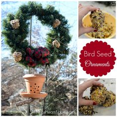 Image result for bird seed on wreath