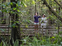 Corkscrew Swamp Sanctuary is a haven for wilderness wonders, including the world's largest remaining stand of virgin old-growth bald cypress forest. White Sand Beach, Palm Beach, National Geographic Travel, South Florida, Day Trips, Wilderness, Ranger, Beaches, Parks