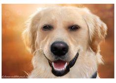 Dieter fursuit mounts rubber husky pup