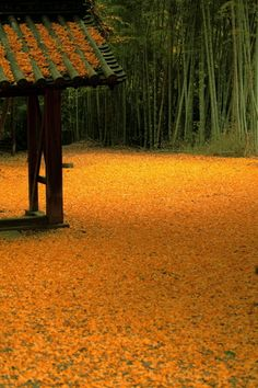 Ginko carpet at Yamazaki Shoten Temple, Kyoto, Japan 山崎聖天 京都 : And the sight of all those little fan shaped leaves twisting on a ground of color must amaze.