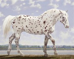 John Neil Rodger - artwork prices, pictures and values. Art market estimated value about John Neil Rodger works of art. Pretty Horses, Horse Love, Beautiful Horses, Animals Beautiful, Caballos Appaloosa, Appaloosa Horses, Leopard Appaloosa, Majestic Horse, Thoroughbred Horse