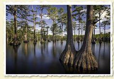 Apalachicola National Forest Fl Apalachicola Pinterest National Forest Hollywood