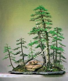 Nick Lenz larch forest with tank. One of my favorite bonsai compositions