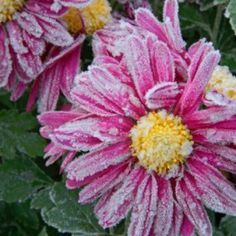 Preparing Your Garden for Winter | ThriftyFun