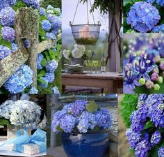 . Hortensia Hydrangea, Hydrangea Garden, Hydrangeas, Beautiful Collage, Beautiful Flowers, Spring Garden, Collages, Color Inspiration, Flower Art