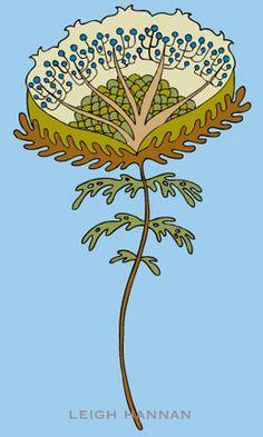 cotton flower; www.leighhannan.com