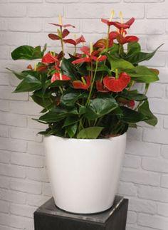 Φυτά και λουλούδια που φέρνουν τύχη! | InGolden Feng Shui, Planter Pots, Beautiful Pictures, Sweet Home, Garden, Flowers, Home Decor, Lawn And Garden, Garten