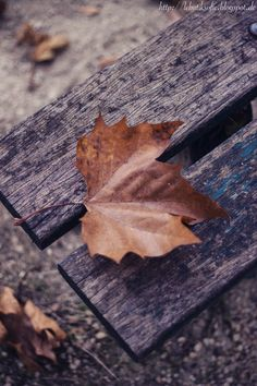 #Autumn leaf on a wooden bench