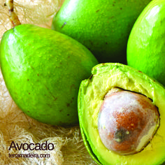 Avocado, pear-shaped fruit with dark green skin. The avocado's pulp is very creamy and delicious. Common used for ice-cream, mousse, cake, pudding, sushi, meat dishes and fish dishes. You also can eat it with a pinch of sugar  and salt.  #terramadeira