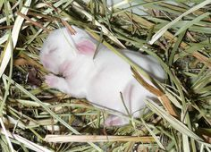 Three-day-old bunny sleeps soundly - December 14, 2012