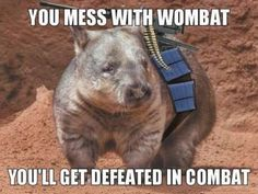 You mess with the wombat, you'll get defeated in combat