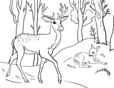 printable deer coloring page free pdf download at httpcoloringcafecom