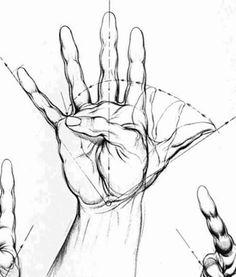 Surface Anatomy Little Finger