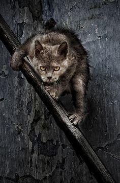 Birte's cat