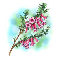 Common Heath Flower Digi Stamp in Digital images