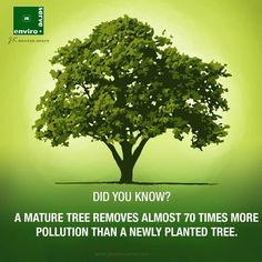 Afforestation helps pure air and overcome air pollution. Tree Day, Central Coast, Plantar, Go Green, Global Warming, Trees To Plant, Did You Know, Environment, How To Remove
