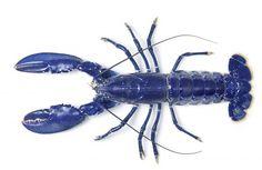 Animali blu