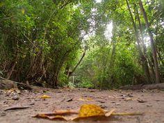 Parque Ecológico do Cocó