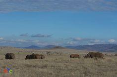 Photographic safaris in the Masai Mara, Samburu, Amboseli, Lake Nakuru and Tsavo National Park in Kenya.
