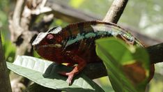 Unusual Animals, Chameleons, Color Change, Film, Plants, Movie, Film Stock, Chameleon, Cinema