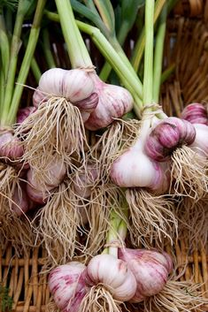 Bunches of garlic farm shop Fruit And Veg, Fruits And Vegetables, Fresh Fruit, Root Vegetables, Organic Vegetables, Gardening Vegetables, Garlic Farm, Vegetable Pictures, Tomato Cages