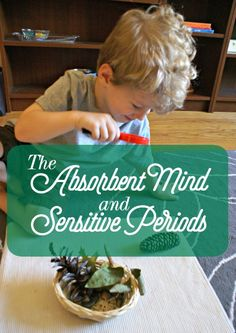 "What are is the Absorbent Mind & Sensitive Periods? - ""Before three, the functions are being created; after three, they develop.""  Maria Montessori, The Absorbent Mind"