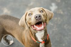 Is your Dog Thriving or Just Surviving? Learn the 5 Signs of Dog Wellness & How to Achieve them! http://www.healthstartsinthekitchen.com/2016/08/26/5-signs-healthy-dog/?utm_campaign=coschedule&utm_source=pinterest&utm_medium=Hayley%20%40%20Health%20Starts%20in%20the%20Kitchen&utm_content=Is%20your%20Dog%20Thriving%20or%20Just%20Surviving%3F%20Learn%20the%205%20Signs%20of%20Dog%20Wellness%20and%20How%20to%20Achieve%20them%21