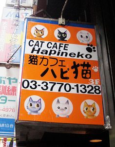 Hapineko Cat Café in Tokyo, where people pay by the hour to sip tea and play with cats.
