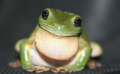We Could Lose 7 Percent of Our Frogs Within a Century