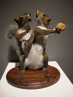 Rogue Taxidermy-reminds me of the crazy little Ice Age Squirrel♡ Ice Age Squirrel, Bad Taxidermy, El Canton, Vanitas, Halloween Themes, Macabre, Natural History, Rogues, Bunt