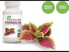 Forskolin en Herbolarios