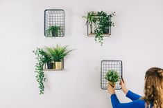 DIY: plants on the wall give your living room a creative twist - Roomed - DIY: plants on the wall give your living room a creative twist – Roomed - Home Panel, Dining Room Walls, Plant Decor, Home Living Room, Room Decor, Contemporary Decor, Barbershop, Apartment Ideas, Landscape Design