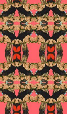 Peonies parrots wallpaper
