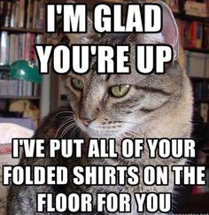 Cat humor... So true!