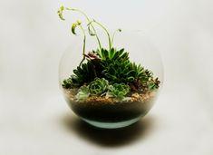 idée déco à l'aide d'un mini jardin en bocal rond