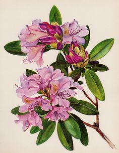 Girly Wall Art Purple Flower Decor Purple Rhododendron Botanical Print Purple Gallery Wall Art Decor Shrub 1764