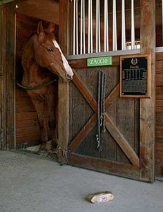 Zaccio, champion steeplechaser, with his Hall of Fame plaque (selections from More Old Friends by Barabara Livingston) Horse Racing, Race Horses, Thoroughbred, Old Friends, Livingston, Champion, Fun, Animals, Photos