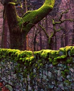 Ohhh...moss-covered stone walls. LOVE.
