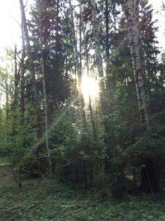 Лес. Зеленоград