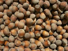 5 Things You Probably Didn't Know About Hazelnuts!