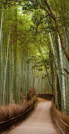 Bamboo groves of Arashiyama in Kyoto, Japan