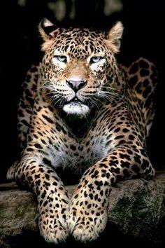 Amazing & Animal pics