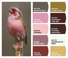 ColorSnap by Sherwin-Williams – ColorSnap by Reni