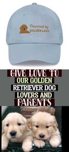 Give love to our Golden Retriever dog lovers and parents with these Golden Retriever gifts for him of a Golden Retriever hat featuring the mug shot of a Golden Retriever puppy. Ideal to give as a stand alone Golden Retriever gifts for him or part of a dog gift set. #GoldenRetrieverGiftsforHim #GoldenRetrieverGiftsforHer  Give Love To Our Golden Retriever Dog Lovers And Parents Puppy Gifts, Dog Gifts, Golden Retriever Gifts, Retriever Puppy, Golden Dog, Mug Shots, Gifts For Him, Dog Lovers, Parents